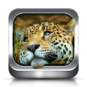 Animal Ringtones and Wallpaper icon
