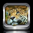 Animal Ringtones and Wallpaper icon