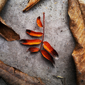 Autumn by Lara Mérnökasszony - Nature Up Close Leaves & Grasses ( fall leaves on ground, fall leaves )