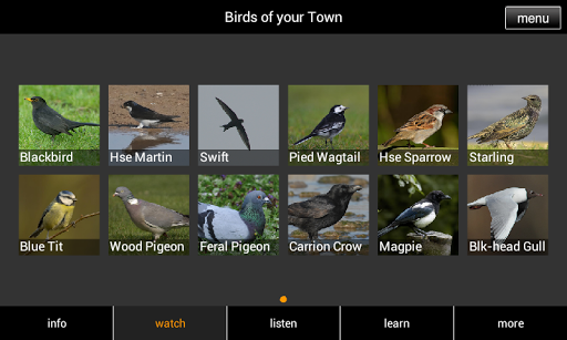 Birds of your Town