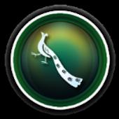 Nice Peacoke C Launcher Theme