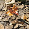 Flame Skimmer