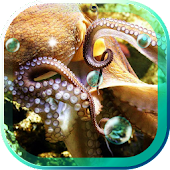 Octopuses and Squids HD LWP