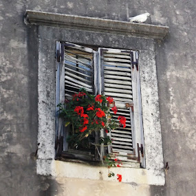 Dove in Dubrovnik by Shona McQuilken - Buildings & Architecture Architectural Detail ( window, dubrovnik, wood, street, flower, dove,  )