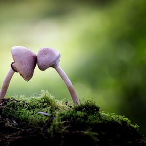 by Aris Susanto - Nature Up Close Mushrooms & Fungi