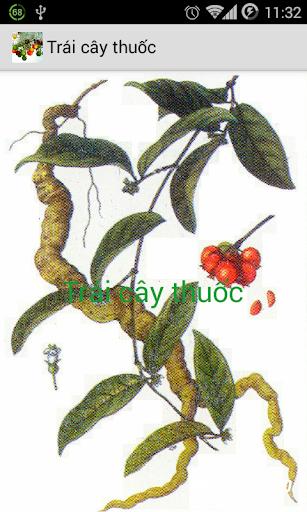 Trái cây thuốc Trai cay thuoc