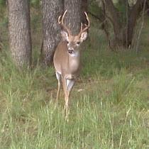 San Antonio Biodiversity