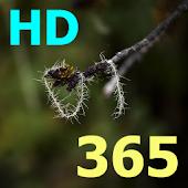 Bijbel 365 HD