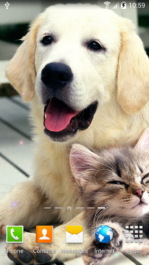 Dogs Wallpaper Android Apps On Google Play
