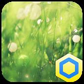 숲속의 아침 - 카카오홈 테마 1.0