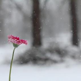 Natura spontanea parte 1 by Stefano De Maio Fotografia - Flowers Flowers in the Wild ( macro, nature, snow, italy, flower )