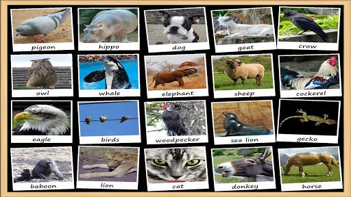 Animal Sounds Soundboard