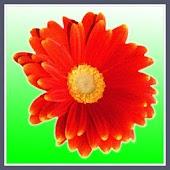 Flower Taps