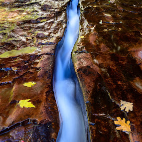 Balance by Adam Collins - Nature Up Close Other Natural Objects ( fall leaves, national park, subway, fall colors, canyon, zion, left fork )