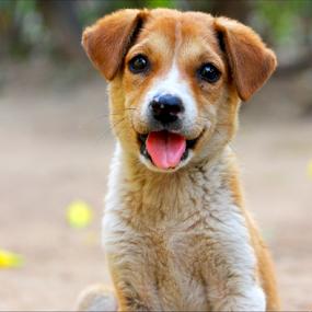 by Arnab Choudhury - Animals - Dogs Puppies