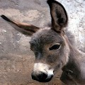 Donkey APK for Kindle Fire