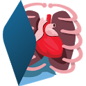 Human Body Anatomy 3D - Free icon