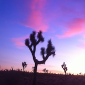 Let Go & Let God Desert Prayer
