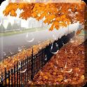 Maple Drops Live Wallpaper icon