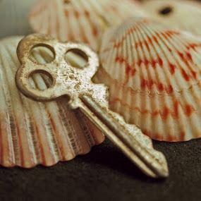 Shell treasure key by Skye Stevens - Artistic Objects Still Life (  )