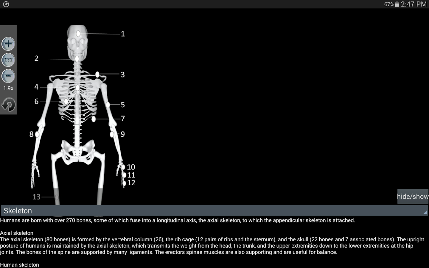 Human bones lite- screenshot