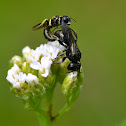 (Not so) Solitary bees