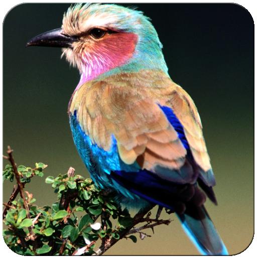 Birds Wallpaper 娛樂 App LOGO-硬是要APP