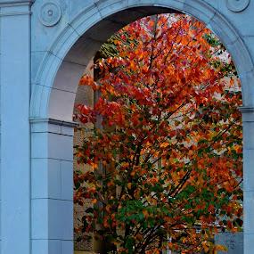 by Karen Jaffer - Uncategorized All Uncategorized ( arch, autumn, trees, architecture, leaves )