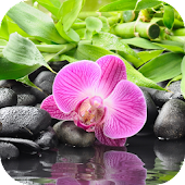 Orchid Flower Live Wallpaper
