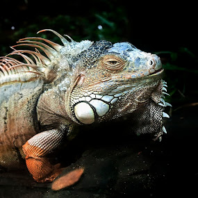 Jungle experiences by Anna Tatti - Animals Reptiles (  )