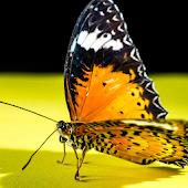 Butterfly HD Photo