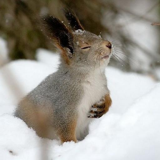 Winter and Squirrel wallpaper