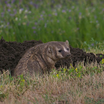 Wildlife of the Prairies