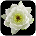 Flowers Video Live Wallpaper icon