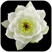 Flowers Video Live Wallpaper