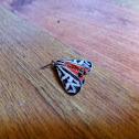 Parthenice Tiger Moth