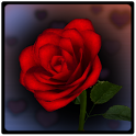 3D Rose Bouquet Live Wallpaper icon