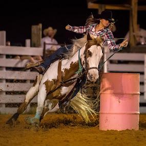 Paint Barrel Racer by Lynn Wiezycki - Sports & Fitness Rodeo/Bull Riding ( barrel racing, rider, barrel racer, horse, rodeo )