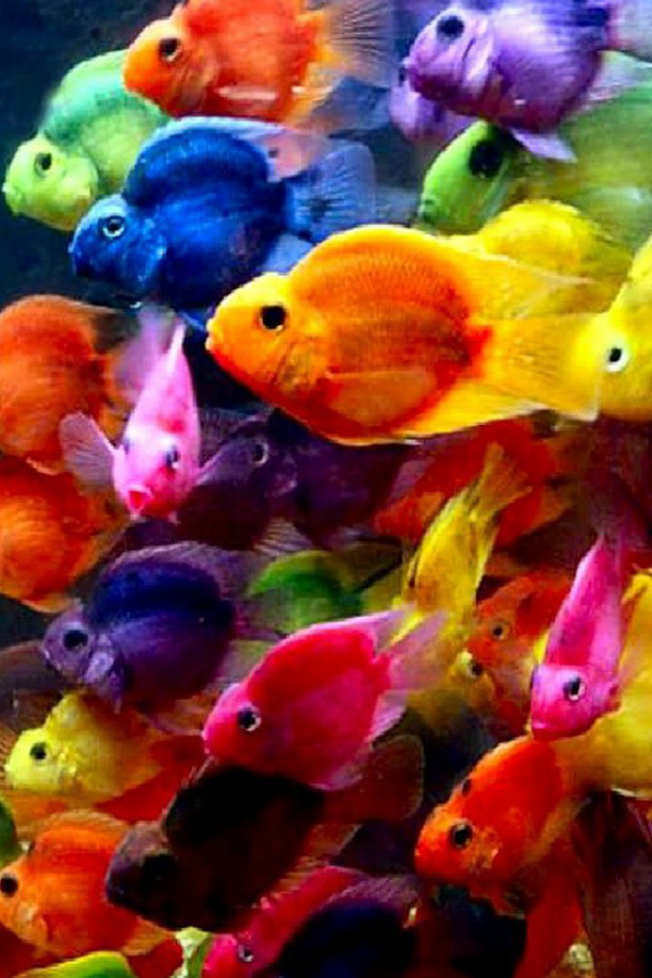 Fish Wallpaper Android Apps on Google Play