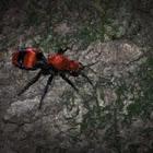 Red Velvet Ant (Cow Killer)