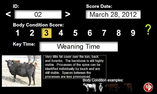 Body Condition Beef Cattle - screenshot thumbnail