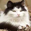 Cute HD Cats Wallpapers icon