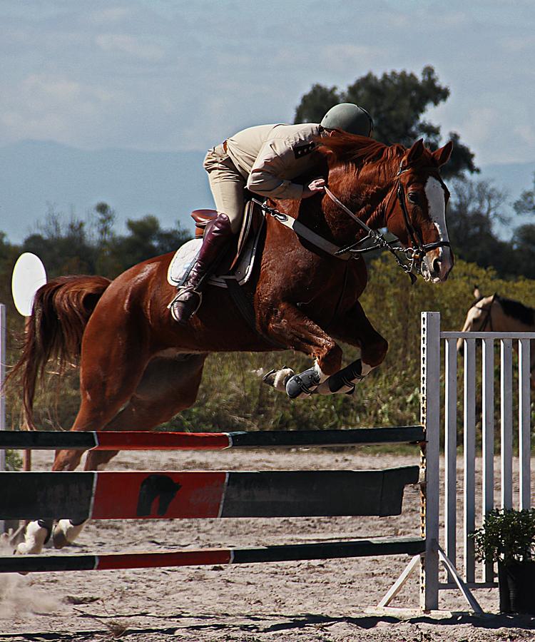 by Javier Fernandez - Animals Horses