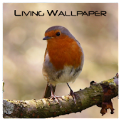 A Living Wallpaper - Robin