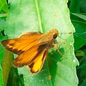 Zabulon Skipper