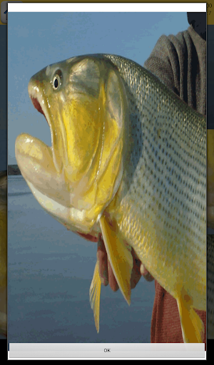 Fishing and fish game