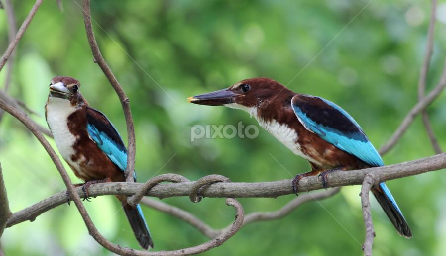 by Moumita Dey - Animals Birds (  )