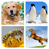 Animal Sounds - Ringtones