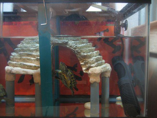 pet turtle basking platform