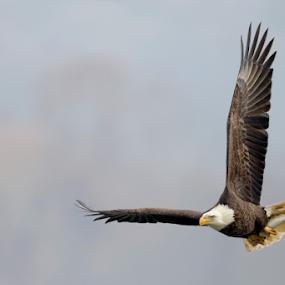 by Herb Houghton - Animals Birds ( www.herbhoughton.com )